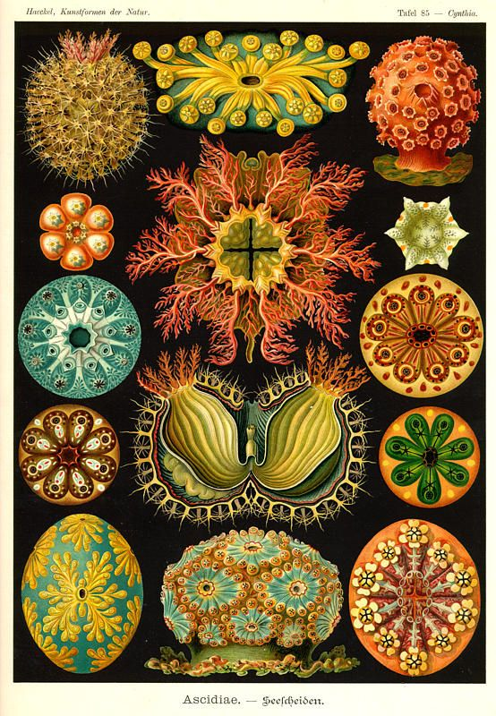 I also love fractal images found in nature and biology type sketches.