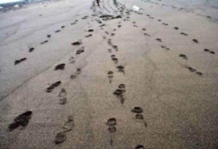 Ternyata Jejak Kaki Bisa Ungkap Kecepatan Makhluk Hidup Berjalan