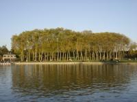 BERGES DU GRAND CANAL PLATANES PRES DU BASSIN D'APOLLON