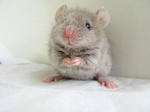 358 Best Images About A Mouse In My House On Pinterest