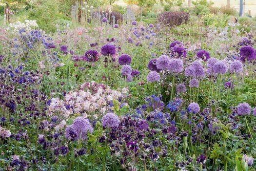 Bloeiende planten in weelderige tuin.