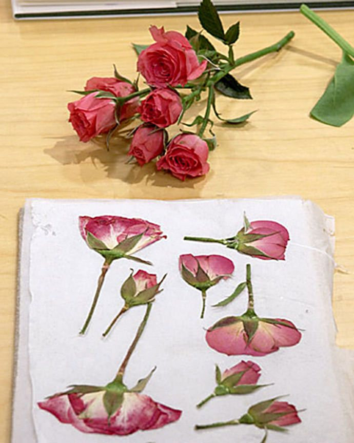 A quick way to press flowers using your microwave via Martha Stewart - cool!