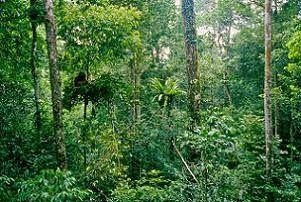 Jual Tiket Pesawat: Taman Nasional Gunung Palung Pontianak Indonesia  Taman Nasional Gunung Palung (TNGP) merupakan salah satu taman nasional yang terlengkap di antara taman-taman nasional di Indonesia. TNGP terletak di Kabupaten Ketapang dan Kabupaten Kayong Utara, Propinsi Kalimantan Barat. Taman nasional ini berada di ketinggian 900-1.116 mdpl dan diresmikan pada tanggal 24 Maret 1990.