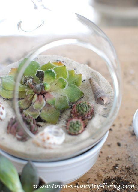 Make Your Own Hanging Globe Terrariums - Town & Country Living