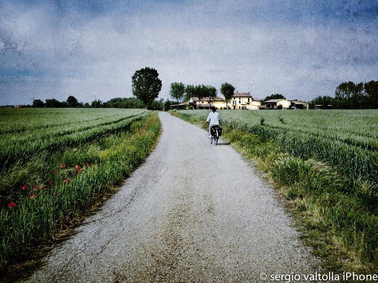 campagna piacentina, vita in campagna (2013, cadeo, italy)