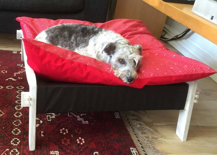 Arial all comfy on her Tissi bed, soft cushion, adjustable hammock and off the floor! Absolute dog heaven! Bespoke furniture and furnishings for discerning pets.