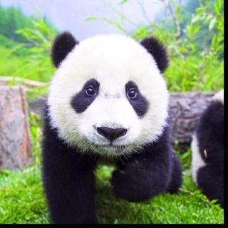 Beschrijf je notitie...pandabeer