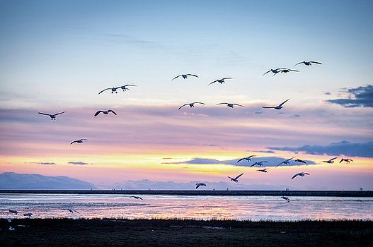 Art Calapatia - Birds in Flight at Iona Beach 2