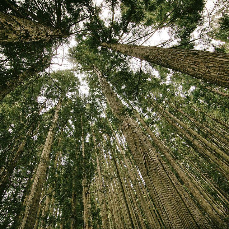FSC | La Calidad de los Bosques | CoolMaison