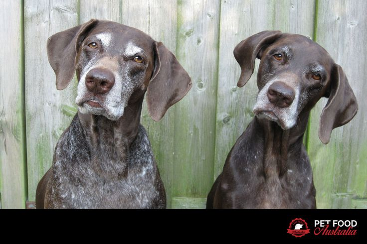 Hey pet lovers! What do you think these two are thinking? Caption the photo...