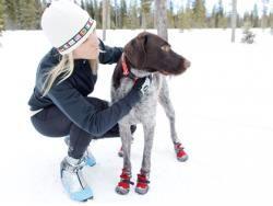 Ботинки для собак больших размеров