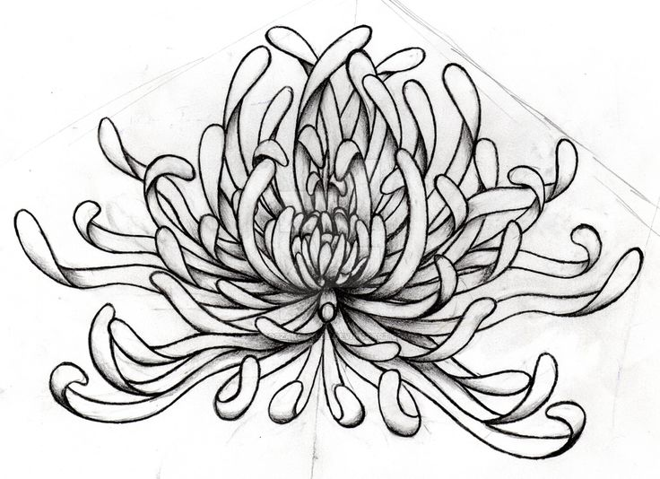 Japanese Flower Line Drawing : Best mums images on pinterest chrysanthemums flower
