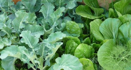 Vegetable Gardener's Diary - June | Tui Products