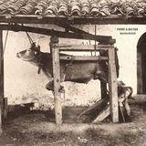 Musique Grecque [LP] - Vinyl