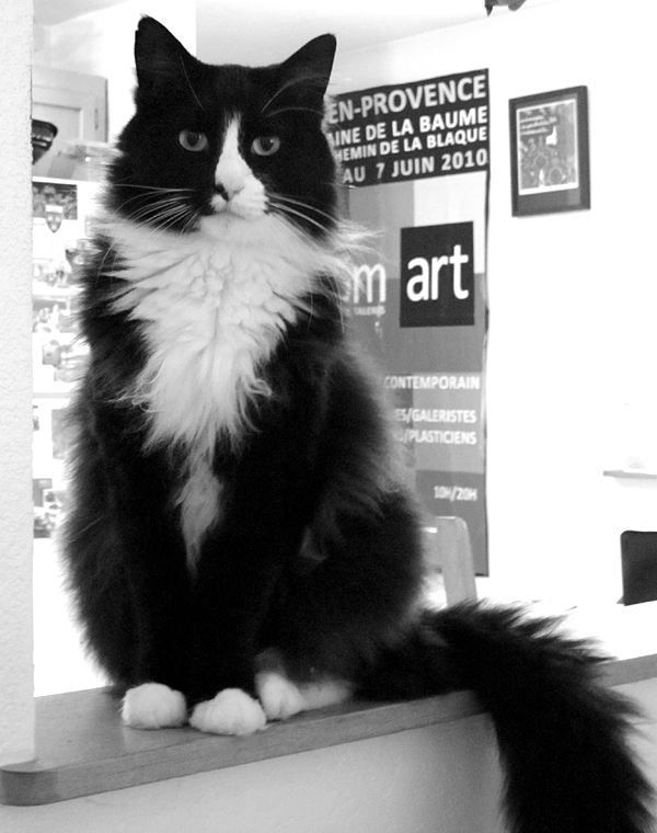 French Cats Flood the Book Market