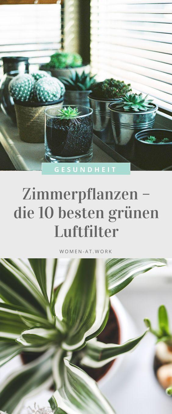 Zimmerpflanzen – die 10 besten grünen Luftfilter