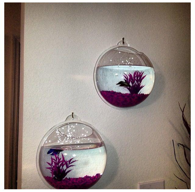Hanging beta fish