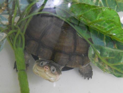 Happy turtle , little turtle, pur, pur , purrrrrrr.