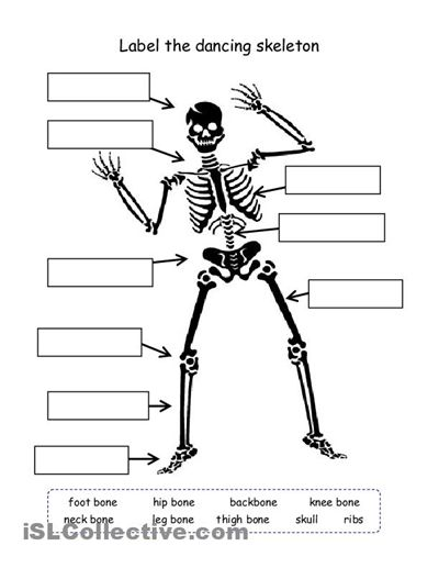 cut and paste skeleton homeschooling pinterest human body unit. Black Bedroom Furniture Sets. Home Design Ideas