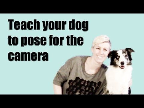 ▶ Teach your dog to pose for the camera on cue - dog training clicker - YouTube