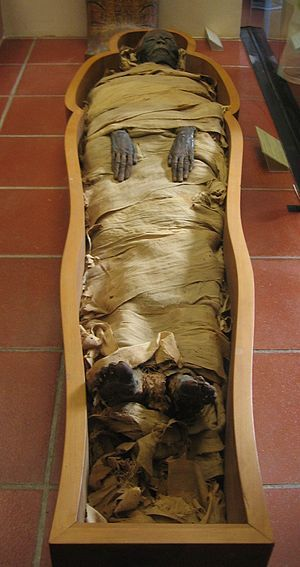 An Egyptian mummy kept in the Vatican Museums. The culmination of elements that have to come together to make these mummies possible is incredible and completely mind blowing- They are truly a thing of beauty.
