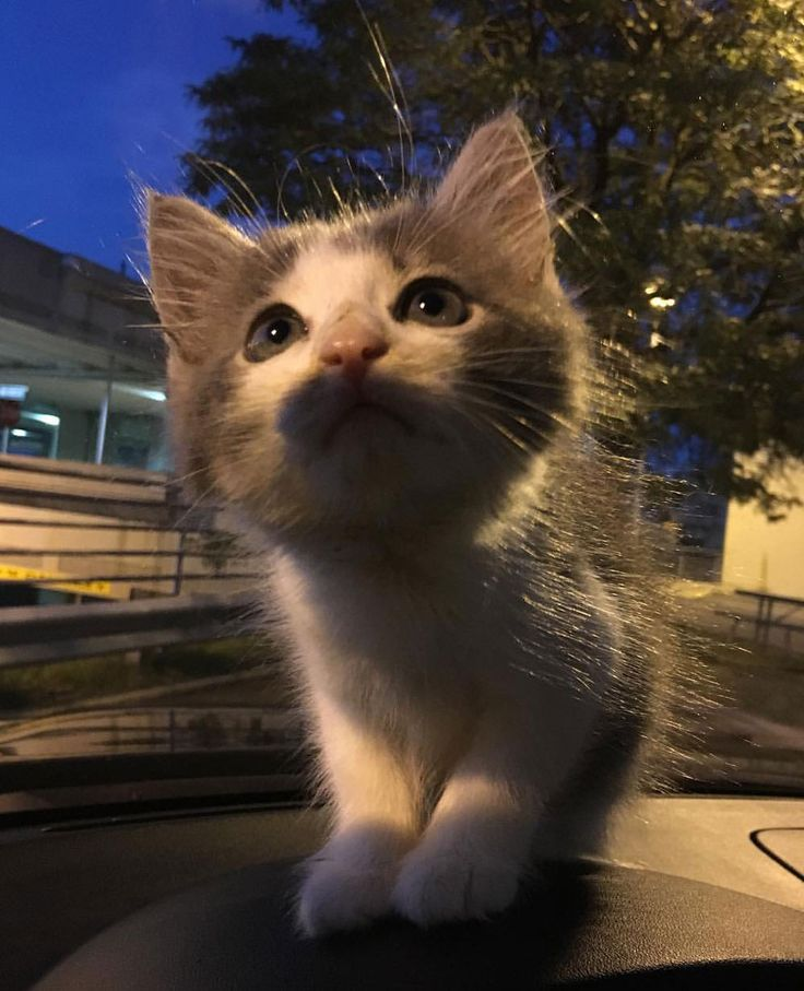 Top Viral Pictures: 179 Best Just Viral Kittens Images On Pinterest