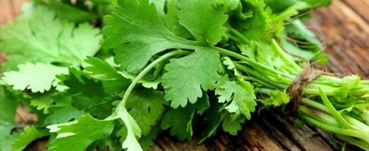 A erva que é esquecida - cura rins, pâncreas, intestino, fígado e é excelente para as mulheres! - Receitas e Afins