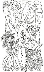 The Umbrella by Jan Brett. All you need is a large sheet of mural paper about 3 feet by 6 feet. Then color, cut out the images and paste to the mural. Print as many copies as you wish to make your classroom into a rain forest. Use big leaves as props for smaller animals, frogs, and insects. If you have a copier with options, reducing, enlarging, and mirroring will give you lots of ways to vary the images. There are several sizes of animals here to chose from too!
