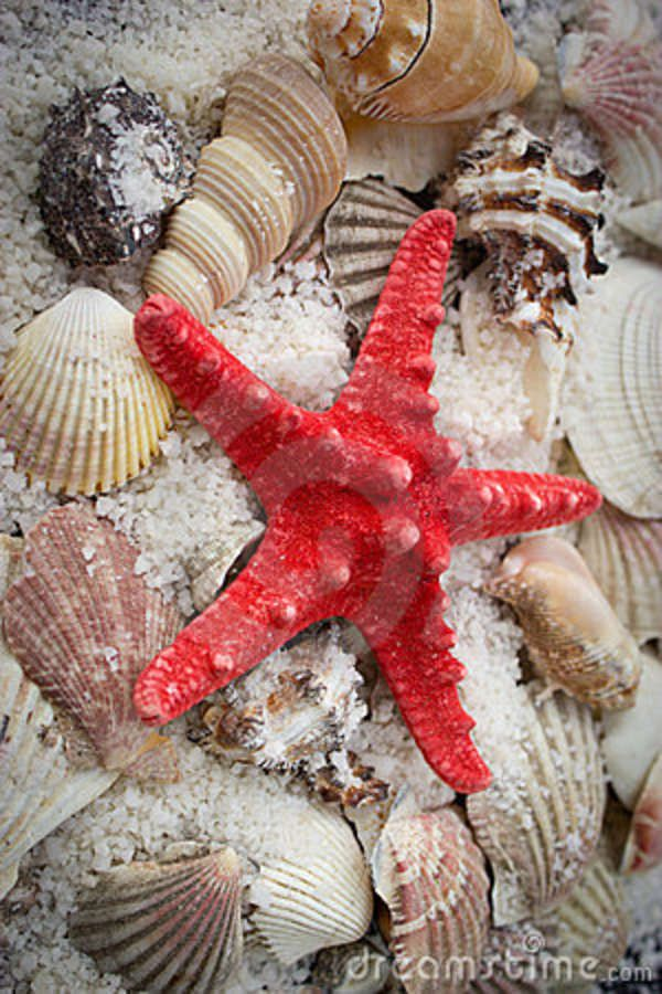 sea shells and seastar, I just had to add a little red....