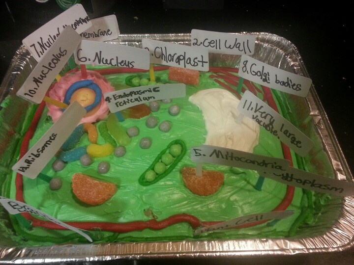 Pictures of 3d Plant Cell Project Ideas - #rock-cafe