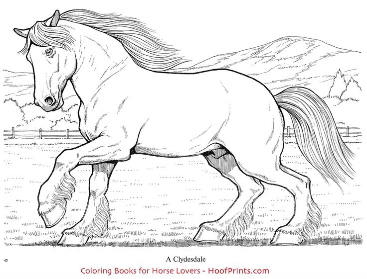 19 best Coloring Books for Horse Lovers images on Pinterest ...