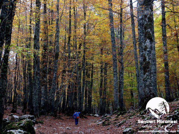 Abbandona le paure... Pollino National Park