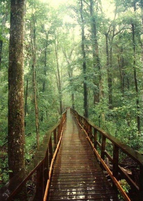 wooden bridgeCongar National, Southcarolina, Suspen Bridges, National Parks, Places, Suspension Bridges, Weights Loss, Into The Wood, South Carolina
