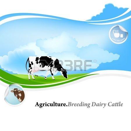 Agricoltura Allevamento bovini da latte sfondo Archivio Fotografico