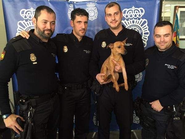 """Varios policías nacionales de Alicante han decidido pagar de su bolsillo una operación a un perro de 9 meses maltratado, cuyo dueño le había roto el cúbito y radio en una paliza, para evitar que el cachorro quedara cojo """"de por vida""""."""