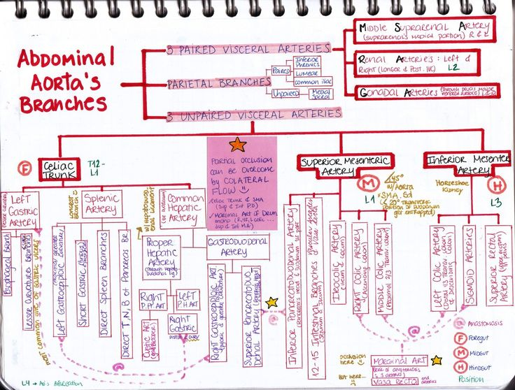 mynotes4usmle: Abdominal Aorta's Branches Let's review this again, shall we? Remember: Lesser curvature: most COMMON site of GASTRIC ULCERS (meaning that, either left -celiac trunk's branch- or right -proper hepatic artery's branch- GASTRIC ARTERIES are gonna bleed depending on the ulcer's location Splenic Artery: longest branch of the Celiac trunk Proper Hepatic Artery: runs through the HEPATODUODENAL LIGAMENT with their friends the Common Bile Duct & the ...
