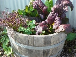 Winter Gardening -Container Gardens: