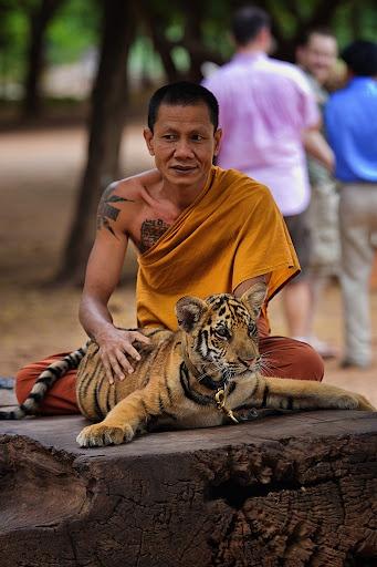 Buddha Monk and young tiger cub @Wat Techapakapong Pha Luang Ta Bua or Tiger Temple Thailand