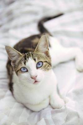 Como fazer seu próprio lubrificante para bolas de pelo em gatos | eHow Brasil
