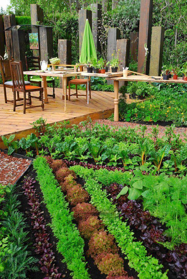 Warzywa w dużym ogrodzie