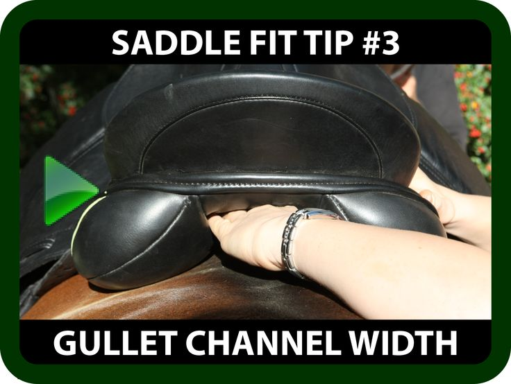 "Schleese Saddle Fit Tip #3 - Gullet Channel Width Ask yourself...  Is your horse reluctant to bend laterally?  Is your horse not able to use its back correctly?  Are you needing to call out the equine chiropractor often?  If you are answering ""yes"" to any of the above questions, you may be faced with a saddle Gullet Channel Width issue. Watch this informative video and learn how to determine if your saddle's gullet channel is the correct width for your horse…"