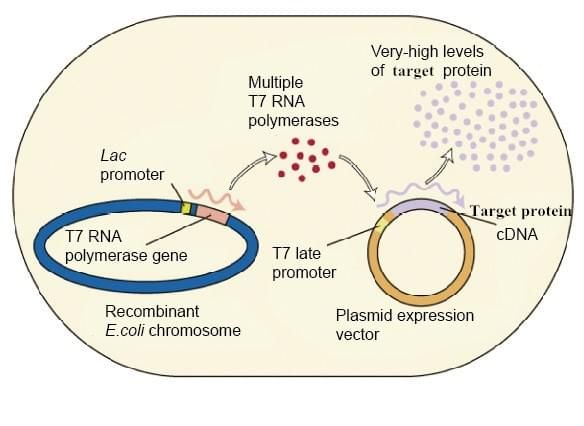 Plasmid Construction, Protein Expression and Purification - Creative Biostructure