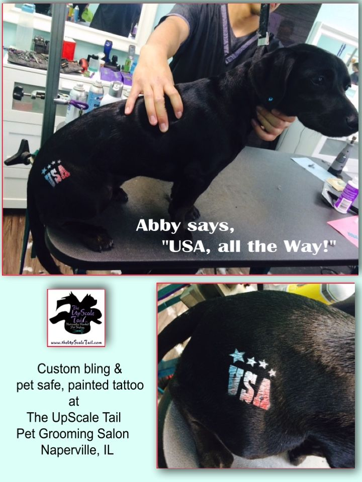 44 best creative color dog grooming images on pinterest welcome to the upscale tail the best award winning certified pet grooming salon in naperville il with over 50 years combined experience in the industry solutioingenieria Choice Image