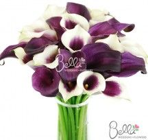 purple-calla-lilies-