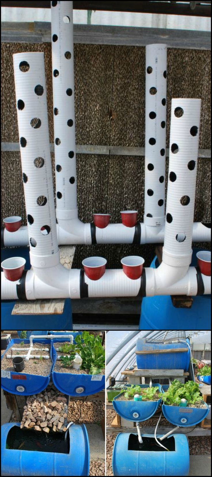 Bl system how many fish in a 55 aquaponics tank info - Learn How To Easily Build A Gravity Based Aquaponic System Http