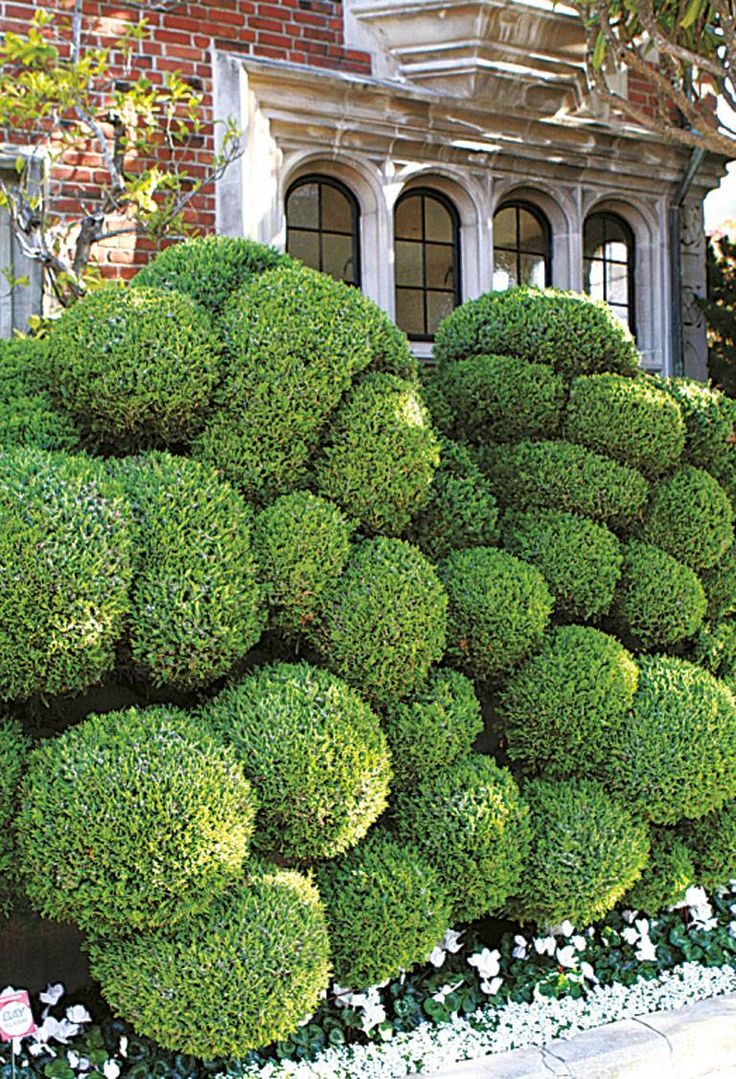 A fabulous hedge of topiary balls !