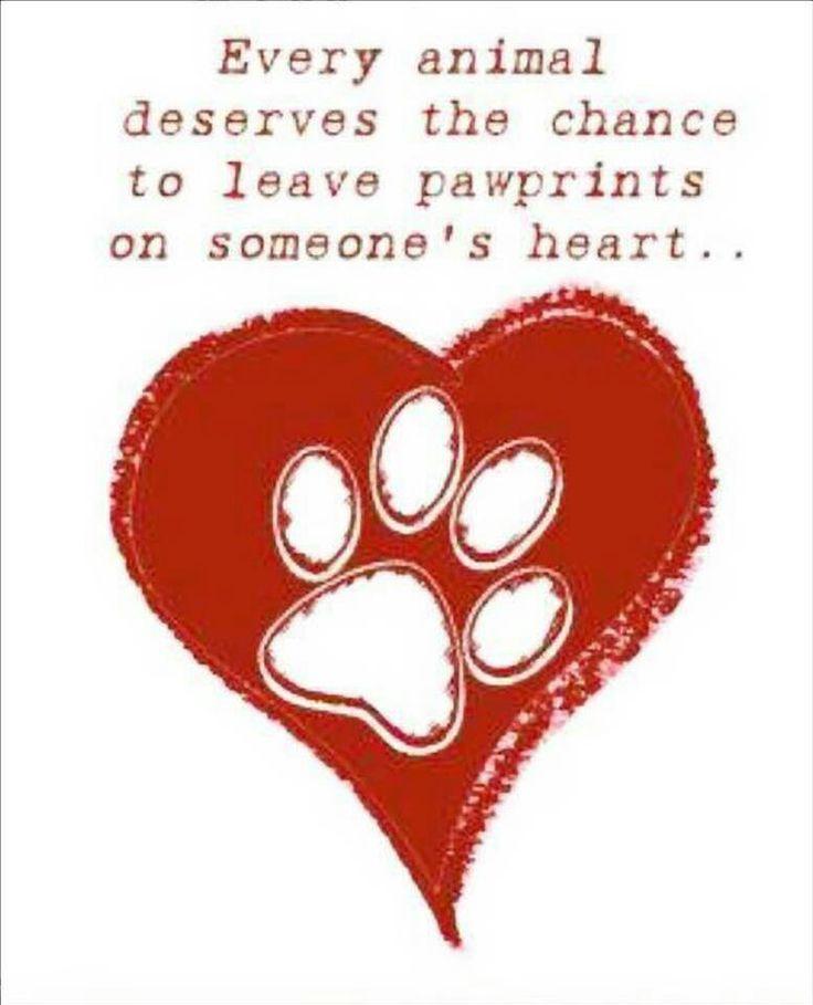 Love Animal Quotes: Animals, I Will