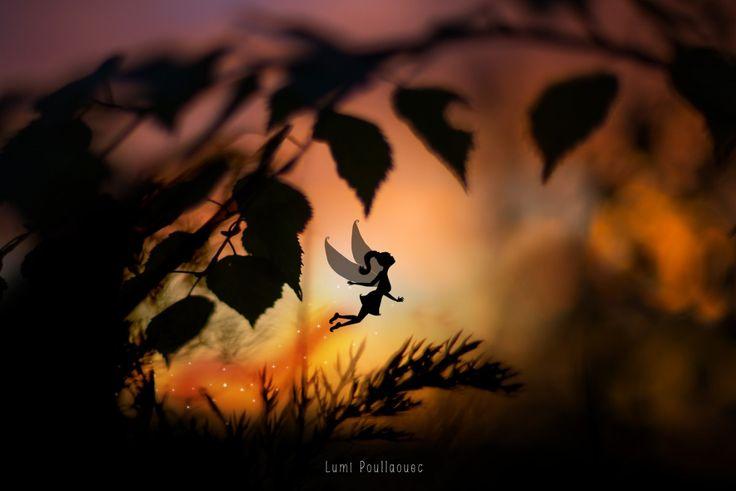#Fée #Dessin #Photographie #Nature #Aurore #Aube #Soleil #Feuille #Contre-Jour