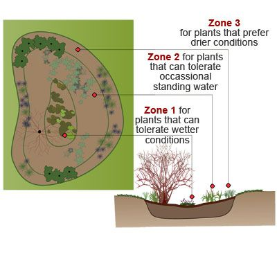 Divert gutter water into an attractive rain garden that works like a sponge and natural filter to clean the water and let it percolate slowly into the surrounding soil. | Illustration: Washington State University Rain Garden Handbook for Western Washington Homeowners | thisoldhouse.com