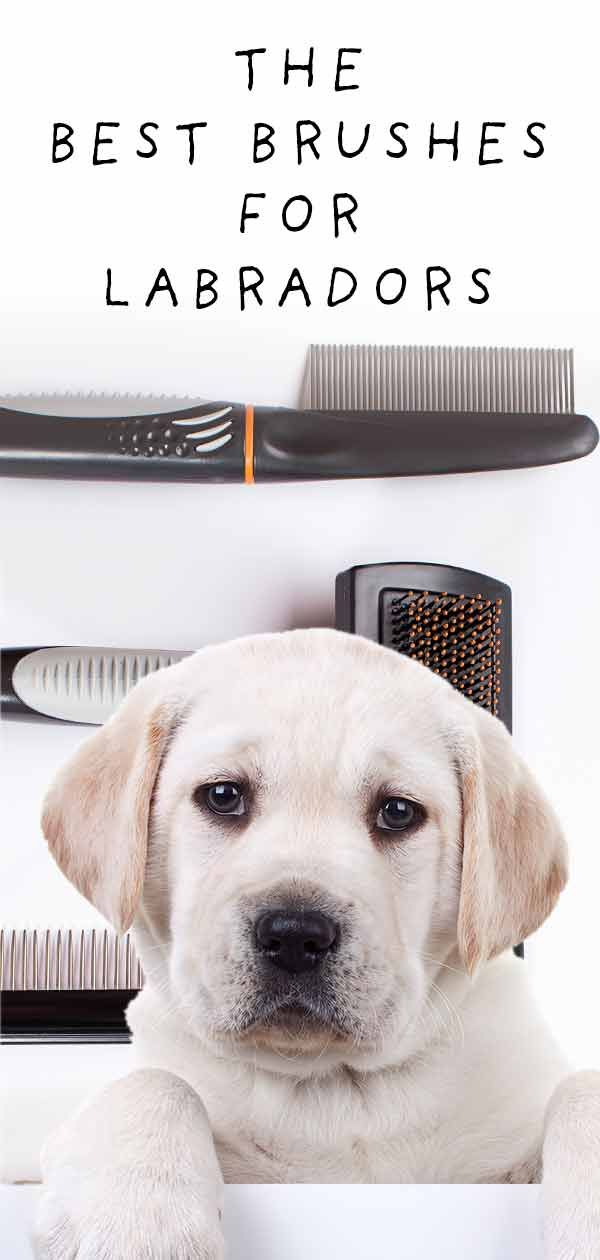 Best Brush For Labs That Shed Loads And Love The Mud Best